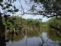 Bird-Lagoon
