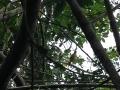Bird-in-Bird-Lagoon