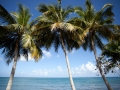 beach-trees