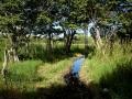 pasture-creek