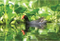 ecology-bird1