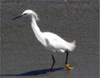 ecology-bird2
