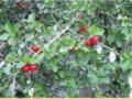 ecology-flora2