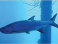 ecology-marine2